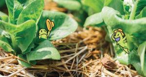 ยาฆ่าแมลงอาจทำให้อ้วน ควรบริโภคแต่น้อย