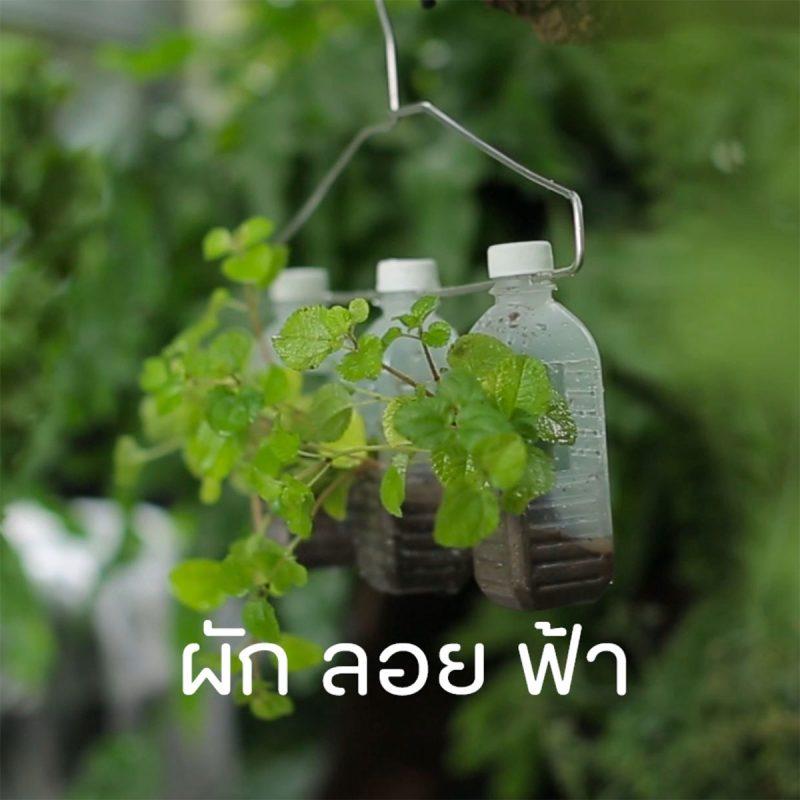 vdo-thumbnail-09