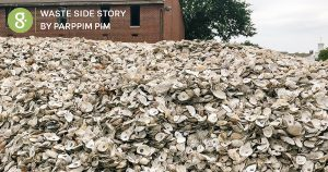 เมื่อเปลือกหอยนางรมนับล้าน กลายเป็นเครื่องกรองน้ำในทะเลนิวยอร์ก